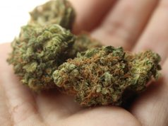 marihuane