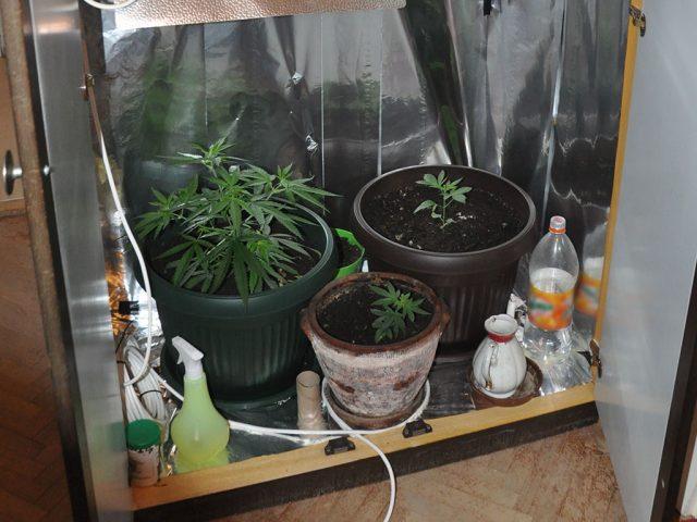 marihuana mini-laboratorija