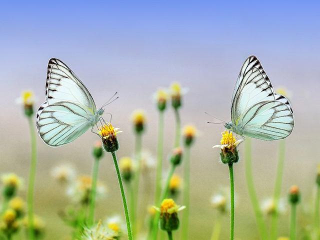 leptiri - vreme