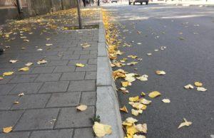 lišće vreme