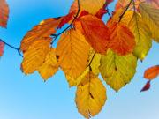 lišće