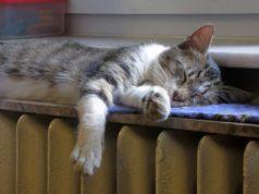 Mačka na radijatoru