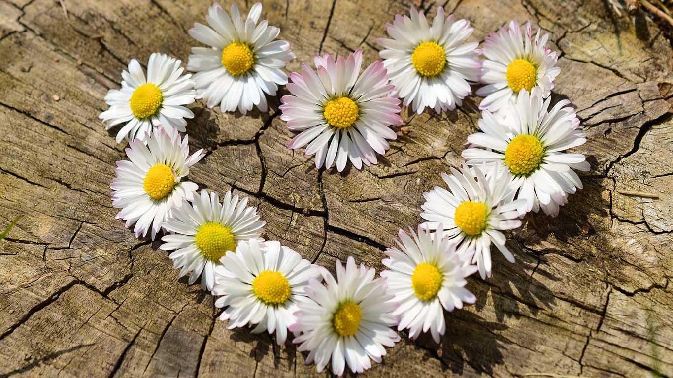 Cvetovi u obliku srca