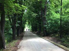 Trčanje kroz šumu na Kraljevici