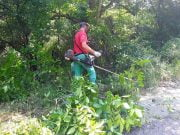 Čišćenje puta ka Selačkoj