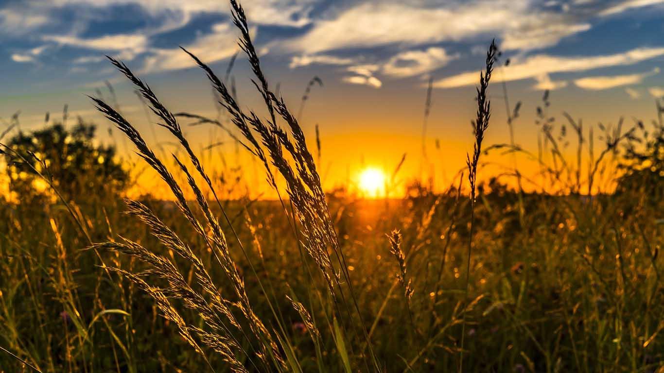 Leto, sunce, trava