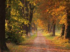 Jesen, šuma, vreme
