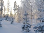 Zima, sneg, šuma, sunčan dan