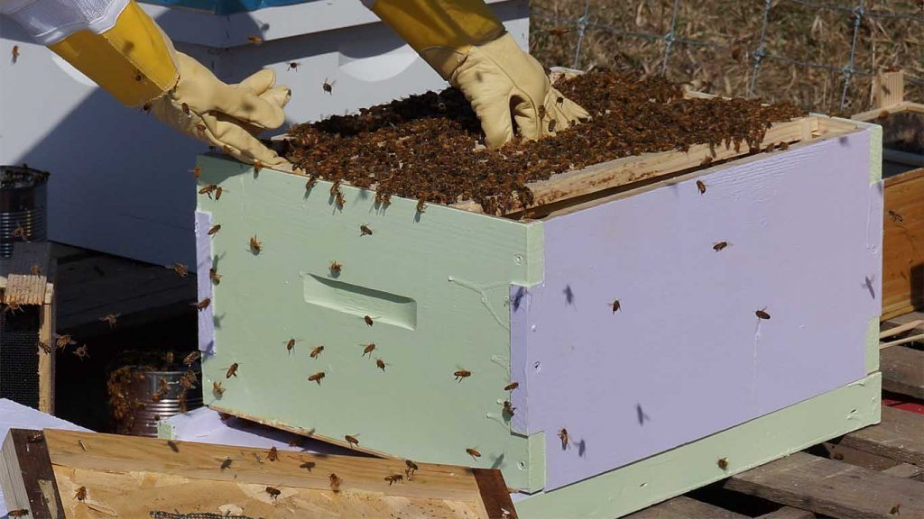 Pčelari, pčele, košnica, ramovi