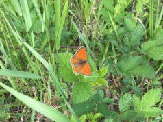 Leptir u travi